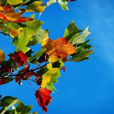 只在窗边坐了会儿,秋天就来了