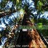 树是地球给天空写的诗 DEMO