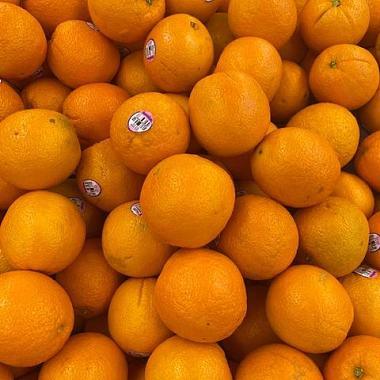 橘子🍊feat.邹兆元 (jason)