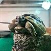 一首乌龟的歌 (Demo)